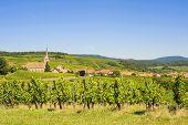 Blienschwiller (Alsacia) - viñedos