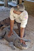 Alligator trainer show