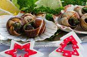 Christmas gourmet - Escargots de Bourgogne (snails with herbs butter)