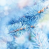 Photo of frozen fir tree background, branches of evergreen tree covered rime, twigs of spruce covered by hoar in the forest, snowy wintertime season, beautiful Christmas greeting card, xmas holiday