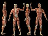 High resolution concept or conceptual human or man 3D anatomy body with muscle isolated on black bac