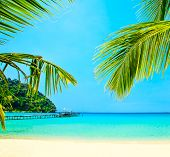 Palm tree leaves on exotic summer beach