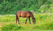 Brown Horse Pastured On Green Valley Eating Fresh Grass Rural Landscape Ecology Clear Concept