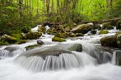 Great Smoky Mountains Spring Green Roaring Fork Cascade