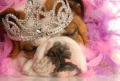 Bulldog Princess