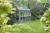 picture of greenhouse  - Greenhouse in back garden with open windows for ventilation - JPG