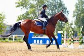 image of horse face  - The sportswoman on a horse - JPG