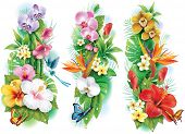 stock photo of plumeria flower  - Arrangement from tropical flowers and leaves - JPG