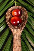 foto of ladle  - Oil palm fruits and wood ladle on a leaves background