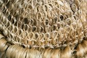 Macro image of an authentic horsehair judge's wig
