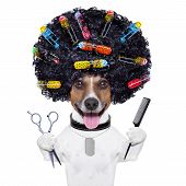 stock photo of hair cutting  - afro look dog with very big curly black hair scissors and hair comb with hair rollers - JPG