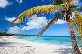 Idyllic beach with palm tree at Bahamas