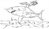 vector - Man diver with a shark dives together