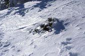 snowy tree in navacerrada madrid spain Europa,