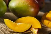 stock photo of mango  - Organic Colorful Ripe Mangos on a Background