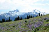 Mt Davidson, Cheakamus Glacier And Castle Towers