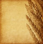 Grungy old paper with Wheat ears