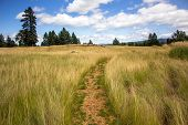 stock photo of grassland  - A trail through a scenic grassland area in the Pacific Northwest