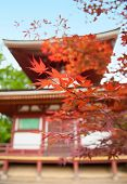 Red Japanese maple in front of a Shinto temple. Shallow DOF
