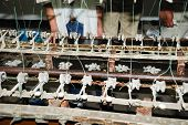 Raw Silk Manufacture By Traditional Manner