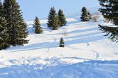Downhill Skiing Tracks In Snow Forest