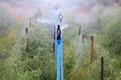 Water Splashing From Outdoor  Sprinkler In Agriculture Plantation Use For Cultivated Field And Garde