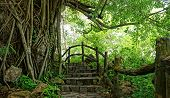Amazing Stone Staircase, Fence, Tree