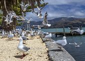 Flock Of Seagull