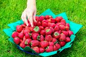 Female Hand Reaches To A Dish Of Strawberries Standing On The Grass. Summer Vacation Concept.
