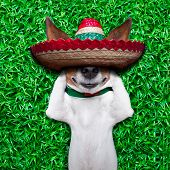picture of mexican-dog  - dog taking a siesta on an empty meadow with mexican sombrero chilling out - JPG