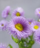 Beautiful wild flowers on grey background