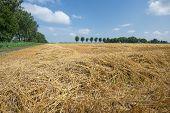 Dutch Farmland With Harvested Wheat