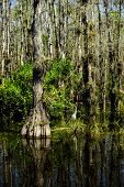 Swamp In The Everglades