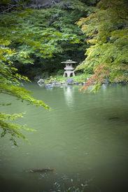 image of koi fish  - Japanese garden with Koi pond maple trees and lantern - JPG