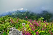 image of wildflowers  - Morning Mist at Tropical Mountain Range with wildflowers - JPG