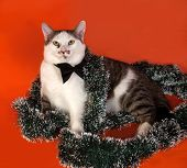 White And Tabby Cat In Bow Tie And Christmas Tinsel Lying On Orange