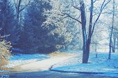 picture of dirt road  - Tree with hoarfrost on the branches near a dirt road the sun is shining the shadow the road turns blue toning - JPG