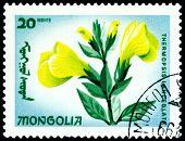 Vintage  Postage Stamp. The Flowerses Thermopsis Lanceolata.