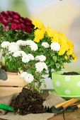 stock photo of plant pot  - Rustic table with flowers - JPG