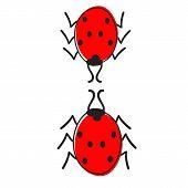 Two Ladybugs Isolated