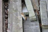 stock photo of chipmunks  - Eastern chipmunk (Tamias striatus) in a wood pile at an urban residence.