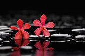 two red orchid with therapy stones