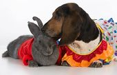 cute bunny and basset hound on white background
