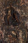 Ole Wood Texture