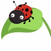 pic of insect  - a ladybug insect standing on top of a leaf - JPG