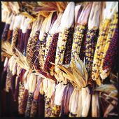 Instagram Filtered Image of Corn Decorations
