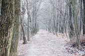 Forest trail at winter