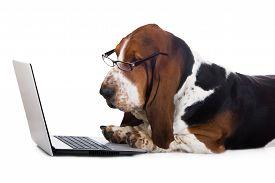 pic of shot glasses  - basset hound dog working on a computer - JPG