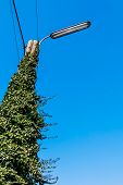 pic of light-pole  - power pole street light blue sky as a symbol of power grid - JPG