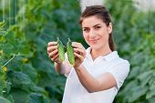 pic of cucumbers  - Happy Young woman holding and eating cucumbers in a hothouse cultivated with green fresh cucumber plants - JPG